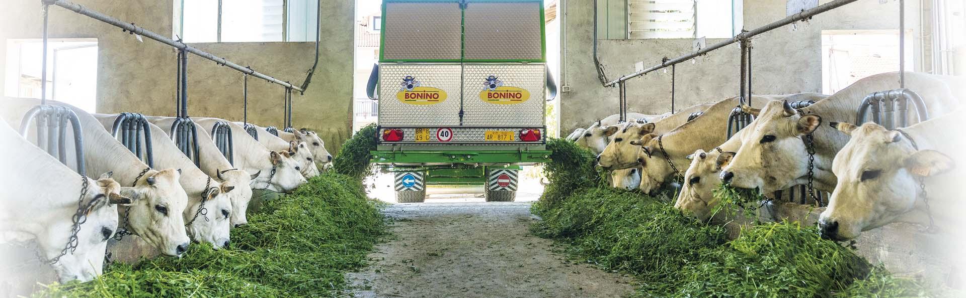 Bonino-alimentazione-con-erba-fresca-più-qualità-latte-feeding-fresh-grass-high-quality-milk