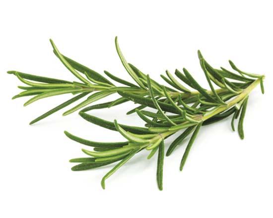 Bonino-macchina-raccolta-rosmarino-rosmarinus-officinalis-harvester-machine-récolteuse-romarin