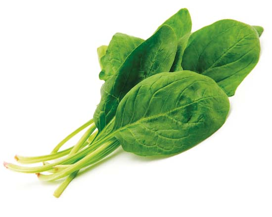 Bonino-macchina-raccolta-spinaci-spinacia-harvesting-machine-récolteuse-épinards